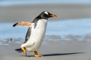 Its Here – Penguin 3.0 (and Webinar for Law Firms)