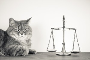 Kitty Cat Decides Justice