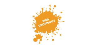 Mockingbird Bird Droppings